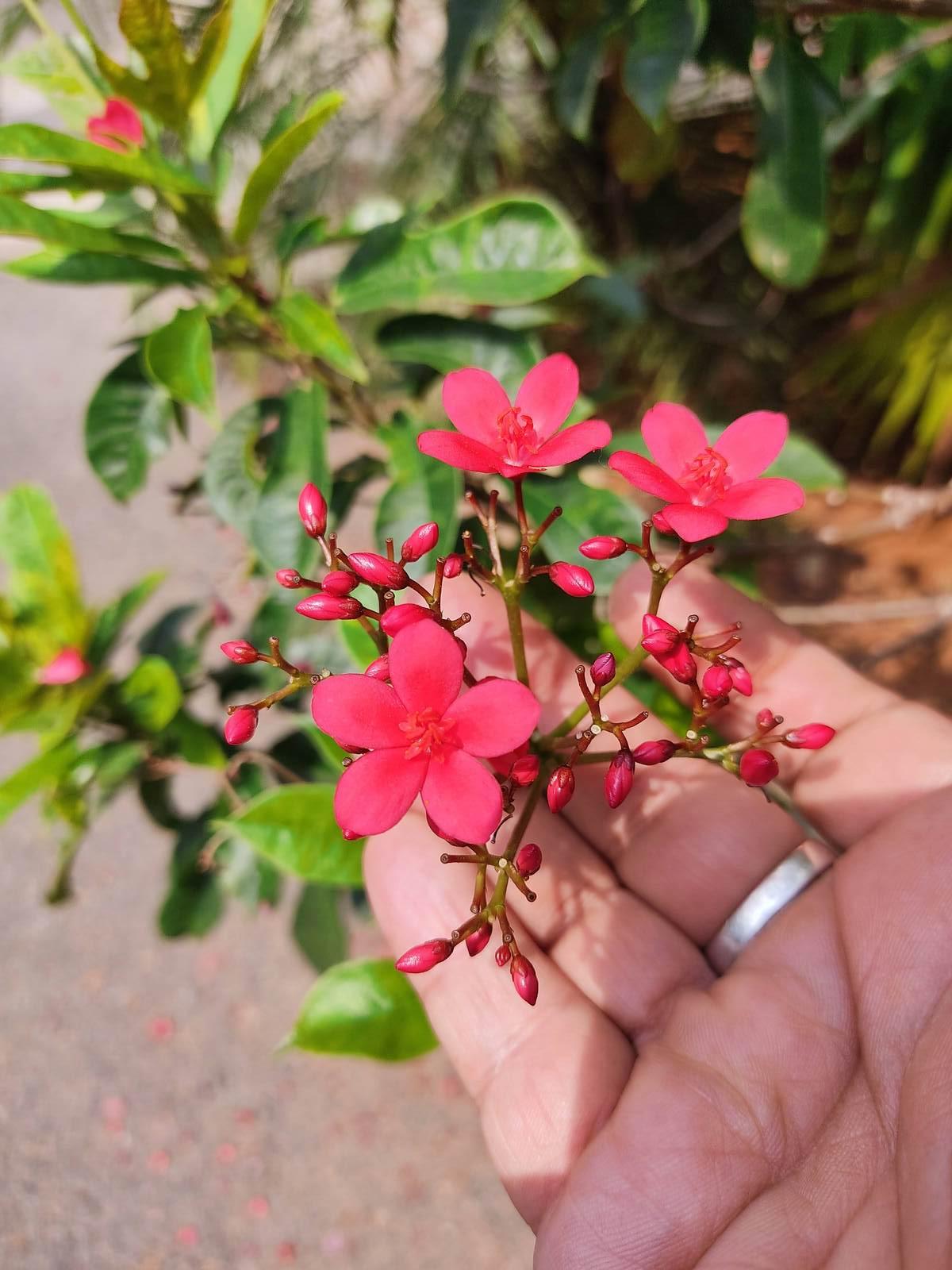Dominating Plant