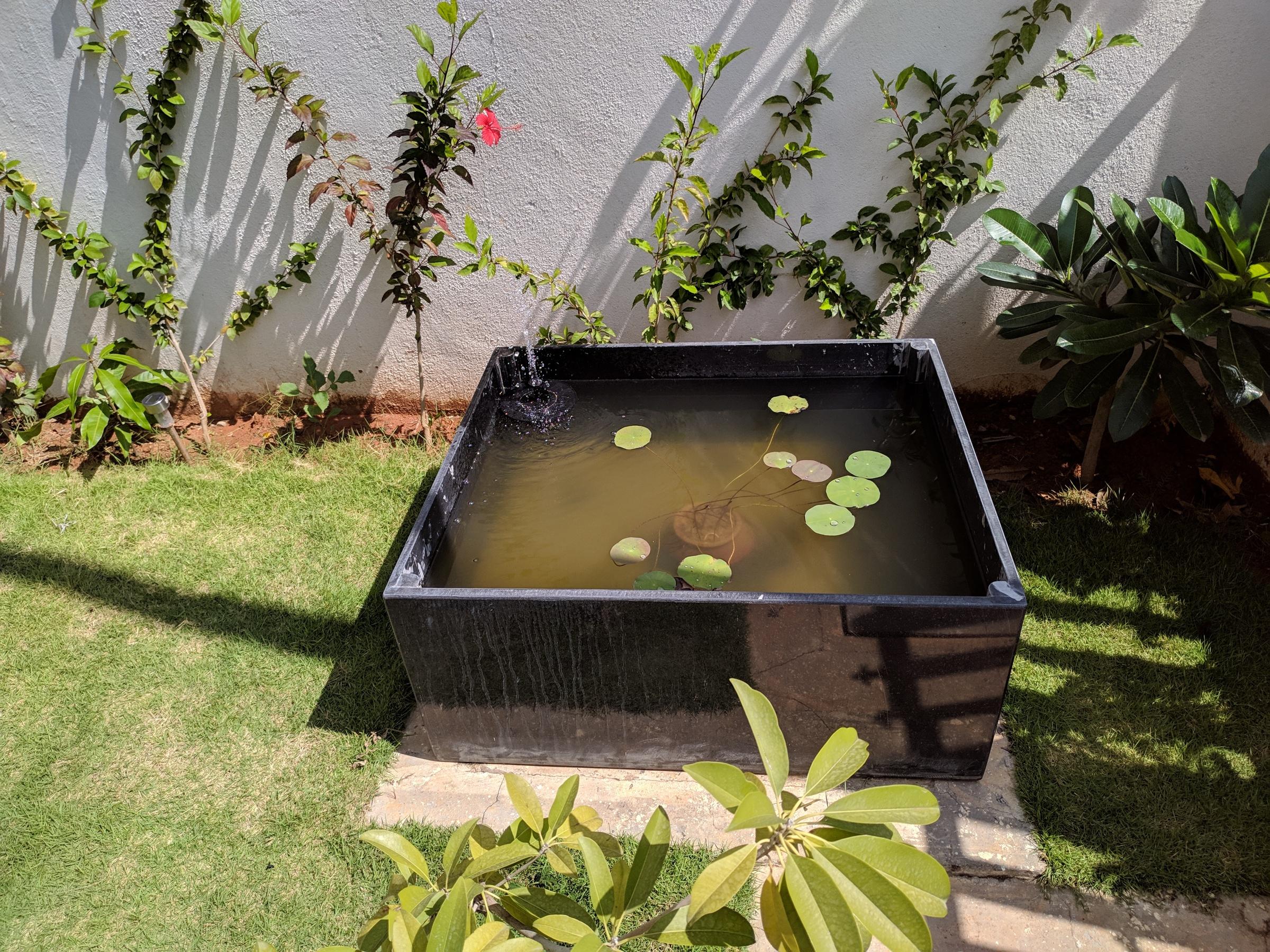 Lotus Pot setup now